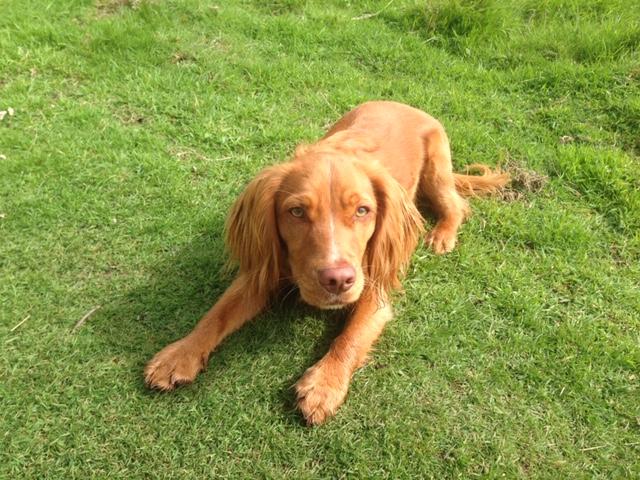 Neils Dog Walker in Edinburgh